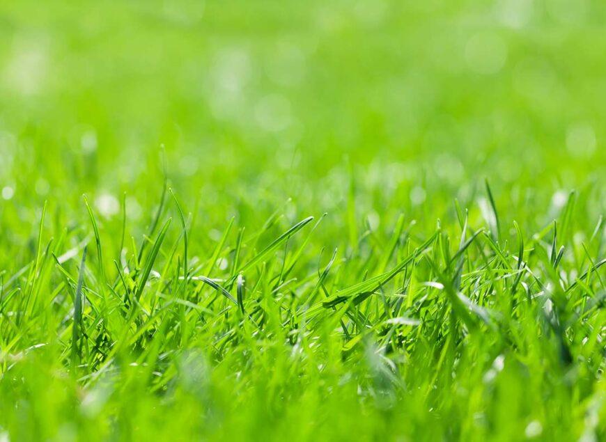 iarba